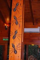 Décoration de fourmis