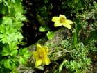 Dernières fleurs du jardin