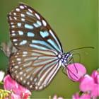 Des ailes colorées