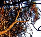 Des branches ...