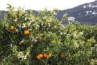 Des fleurs et des fruits