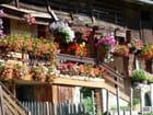 Des fleurs partout...