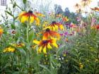 Des fleurs simples, mais aux couleurs très vives