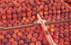Des fruits bien appétissants