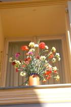 Des oeillets à la fenêtre
