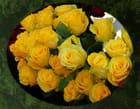 Des roses jaunes...