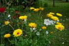 Des soucis dans le jardin