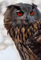 Des yeux magiques