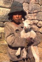 Dessine-moi un mouton ...
