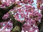 Dessous de Prunus