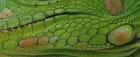 Détail peau d'iguane
