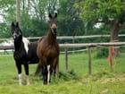 Deux chevaux me regardent