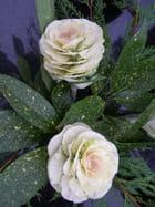 Deux choux en fleur