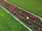 Diagonale en fleurs