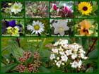 Dicton : Fleur de janvier ne va pas au panier