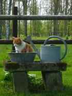 Douche à chat