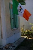 Drapeau irlandais au vent