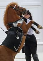 Dressage poney