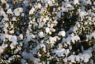 Du coton plein le jardin