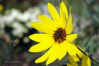 du pollen à l'horizon