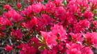 du soleil,  des fleurs et le plaisir...