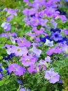Du violet au bleu