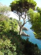 Dubrovnik - crique