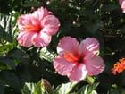 Duo de fleurs