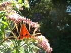 Éclair papillonnant