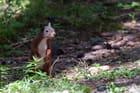 Ecureuil debout dans la forêt