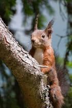 Ecureuil en observation