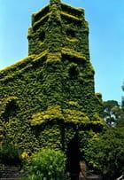Eglise végétale
