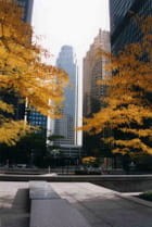 Eh oui,l'automne dans une ville