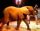 Éléphant du cirque Médrano