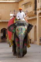 Eléphants à Jaïpur