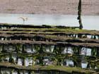 Elevage d'huitres à Saint-Cado