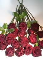 Bouquet de rose fanée