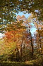En entrant dans le bois