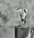 En noir & blanc