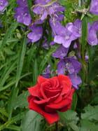 En rouge et violet