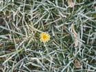 encore des fleurd en janvier???