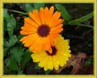 Entre le jaune et l'orange, j'ai du souci à me faire ...