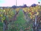 Les vignes dans le Blayais