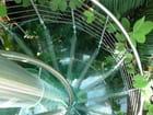 Escalier de verre vert
