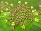 Etoile de fleurs