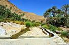 Falaj dans l'oasis du wadi Bani Khalid