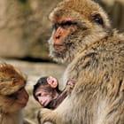 Famille Magot