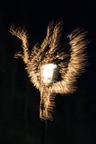Fantôme de la lumière