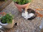 Farniente pour ce petit chat