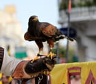 Fauconnerie : un aigle au bras de son dresseur
